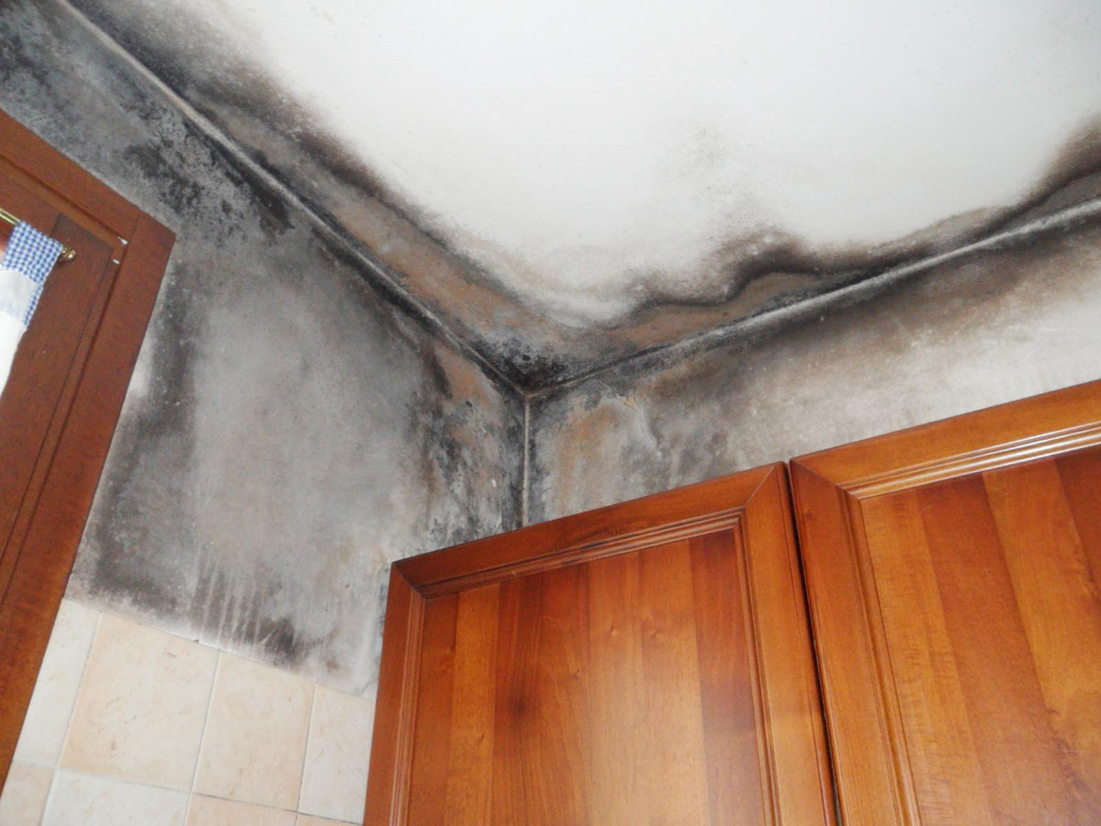 Eliminare la muffa dai muri di casa fabriziorisolve - Combattere la muffa in casa ...